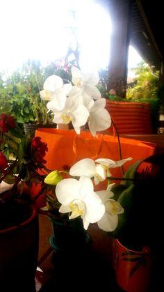 Orquídeas de Kátia...