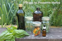 5 Ways to Preserve Your Herbs (plus easy pesto recipe) | Fall is just about here and many of us are busy preserving the summer harvest. While you are freezing, canning, and dehydrating fruits and veggies, don't forget to preserve your herbs, too! Both medicinal and culinary herbs can be preserved in a variety of ways for use throughout the year. Here are 5 ways to preserve and store your herb harvest. | GNOWFGLINS.com