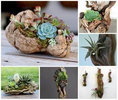 How to Plant Succulents on Driftwood