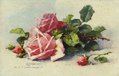 Passion-Old Prints Antique, Vintage, Retro ... and various crafts: Roses for all ...