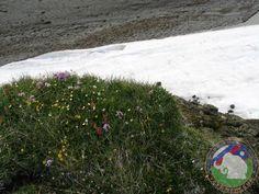 Цветущие растения над заснеженным ручьем