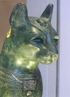 cat profile - Google Search