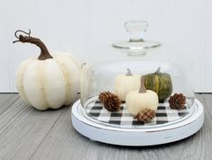 Cheese Cloche Dome Fall Decor Little Pumpkin Patch Centerpiece by Knick of Time