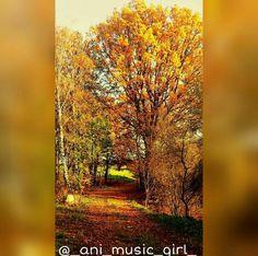 #autumn #orange #tree #forrest #love