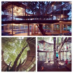 Fuji Kindergarten - outdoor playground, Tokyo Montessori School in Japan. Love how it was built around the tree. Stunning!