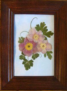 Pressed flowers-Japanese Anemones No. 239  NEW by KTsPressedFlrArt
