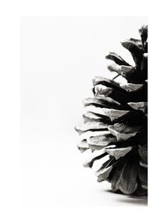 """Nature is graphic and beautiful. A simple black and white image of a pinecone becomes a beautiful photograph when it's captured up close. Less is more. With this image it will add a strong visual element to any home or office space. I find inspiration from found objects out in nature as well as nature itself.""  Pine Cone by Alexis Arnold for Minted"