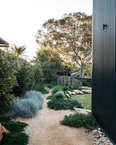A simply beautiful contemporary Australian native Garden done so well. Garden design Plants supplied by A simply beautiful contemporary Australian native Garden done so well. Garden design Plants supplied by