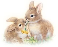 tubes lapins