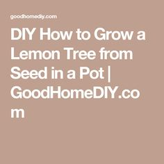 DIY How to Grow a Lemon Tree from Seed in a Pot | GoodHomeDIY.com
