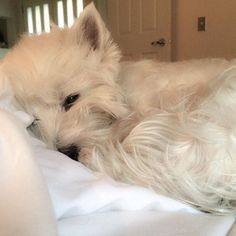 """""""It's a #lazy Sunday for me!"""""""