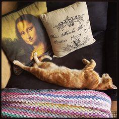 kitty enjoys hookybren's #crochet blanket