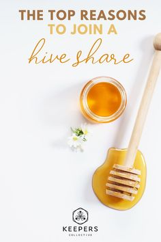 Did you know joining a hive share is one of the best ways to support your local bee community and save bees from dying out? If you're a beginner or don't have the equipment for raising your own bees and honey, read on for how you can help bees, reap health benefits, and more from being a part of a hive share! #honeybees #helpthebees #raisingbees