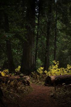 Bright underbrush in a deep forest