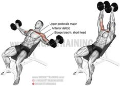Incline dumbbell fly exercise instructions and video Incline dumbbell fly. An isolation exercise. Synergists: Anterior Deltoid and Biceps Brachii (short head only). Fitness Workouts, Great Ab Workouts, Training Workouts, Best Chest Workout, Chest Workouts, Chest Exercises, Stomach Exercises, Ab Exercises, Workout For Flat Stomach