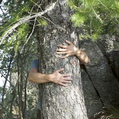 Permission to hug trees. 1 afraid but other does so he does too