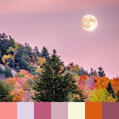 That #fall #moon makes for a dreamy palette.  @nathanocracy | #foundpalettes