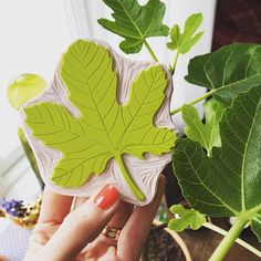 I bought a lovely little fig tree the other day. I have wanted one for ages and it inspired me to carve this fig leaf stamp. I haven't tried it yet so now I'm off to do some printing ☺️