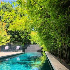 """Waddell Landscape Design's Instagram post: """"Always greener! Bamboo can be a nervous conversation for some people, but the right variety in the right location can be an absolute game…"""" Bamboo Screening, Some People, Landscape Design, Conversation, Canning, Instagram Posts, Outdoor Decor, Green, Landscape Designs"""