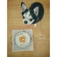 #朝ごはん 😋 ˄̻̊ 米粉の#パンケーキ 焼きました  #pancake  #パン  #bread 🍞  #おいしい #teatime #手作り #今日のコーデ #ママコーデ #ふわもこ部 #あんこ#7歳 #かわいい#親バカ部 #犬バカ部 #chihuahua #チワワ #いつも一緒 #愛犬#犬のいる暮らし #ブラックタンホワイト #ブラタン#スムースチワワ#スムチー #dog #わんこ#犬#おやつ