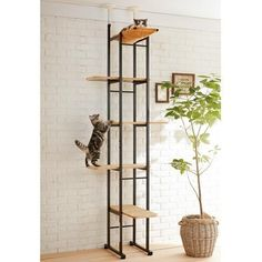 Cat-Shelves: Lovely cat climb offered on Peppy (site is Japanese) Diy Cat Tree, Cat Trees, Cat Shelves, Cat Playground, Cat Enclosure, Cat Room, Cat Wall, Space Cat, Vintage Design