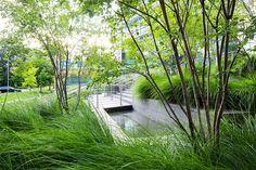 Simons-Center-park-Dirtworks-03 « Landscape Architecture Works | Landezine #omgevingsaanleg #tuin #grassen #bomen