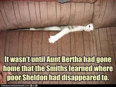 I'm REALLY not a cat person anyway. I hope Aunt Bertha had a huge buffet style Mexican lunch and was unloading hot farts right into poor little Sheldons face for hours!