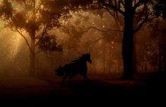 フォレスト, 木, 夜, 馬, ギャロップ, おとぎ話, ファンタジー