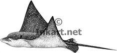 manta ray drawing - Google Search