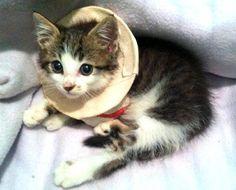 Fundraiser to cover vet bills for kitten thrown from vehicle