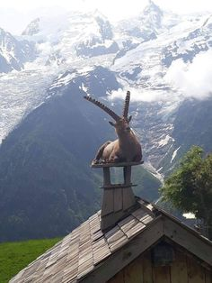 WARMING UP Adult male Alpine Ibex (Steinbock or mountain goat) on a chimney at Merlet Park, Les Houches, France. Photograph by Sandro Lovari. Nature Animals, Animals And Pets, Funny Animals, Cute Animals, Wild Animals, Beautiful Creatures, Animals Beautiful, Alpine Ibex, Tier Fotos