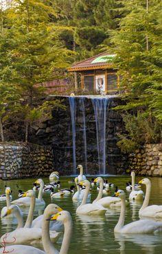 Tehran birds garden - Iran