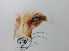 Original Fox Drawing in Color Pencil. $38.00, via Etsy.