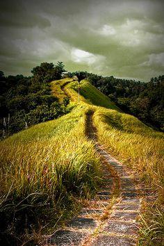 Campuan Ridge Walk | Ubud, Bali, Indonesia