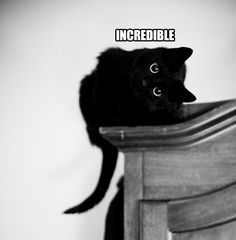 "Tilted cat - ""incredible""."