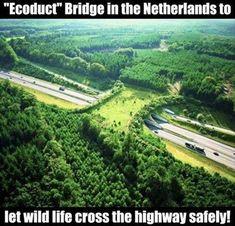 """""""Ecoduct"""" Un puente en Holanda que permite a los animales silvestres atravesar la autopista con seguridad."""