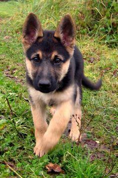Dog , Cute Dog