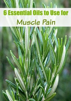 Suffer from having sore achy muscles from a long day at the office, overdoing it, or picking up kids all day? Use these 6 essential oils for muscle pain!