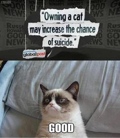 I think I will start breeding cats to give away...