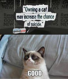 This friggin' cat. Hilarious.