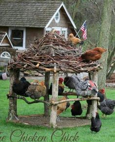 Raising chickens has gained a lot of popularity over the past few years. If you take proper care of your chickens, you will have fresh eggs regularly. You need a chicken coop to raise chickens properly. Use these chicken coop essentials so that you can. Chicken Garden, Backyard Chicken Coops, Chicken Coop Plans, Building A Chicken Coop, Diy Chicken Coop, Chickens Backyard, Backyard Coop, Chicken Feeders, Horticulture