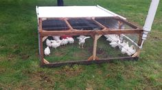 Top Tips To Building The Perfect Chicken Coop Backyard Chicken Coop Plans, Easy Chicken Coop, Building A Chicken Coop, Chickens Backyard, Keeping Chickens, Raising Chickens, Broiler Chicken, Chicken Tractors, Chicken Breeds