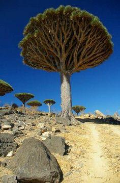 mystical landscapes | Yemeni islands, Dracaena