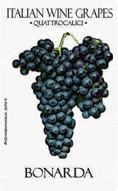 Viticoltura ed Enologia, Vini e Denominazioni per il vitigno Bonarda. I vitigni di tutte le regioni italiane.