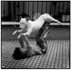 Typical bull terrier...you can do anything to these dogs and they just don't care.