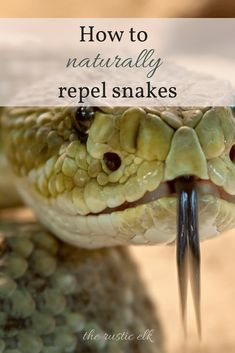 How to Naturally Repel Snakes- snakes are creepy, but serve a purpose on your homestead. Here are some completely natural ways to repel snakes from your property.