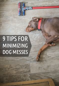 Dog tips   Number four is one even long-time pet owners may not be doing right