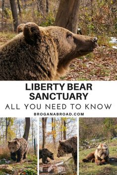 Sadly, a lot of animal sanctuaries that operate as tourist attractions, are not always what they seem. I visited Libearty Bear Sanctuary in #Romania, voted one of the most #ethicalanimalattractions by National Geographic Traveller and a fine example of what sanctuaries should aim for. #bearsanctuary #ethicalwildlifetravel