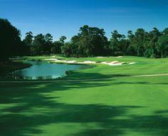 Kiawah's Cougar Point Kiawah Island Resort, Kiawah Island Golf, Myrtle Beach Sc, Golf Lessons, Golf Courses, Around The Worlds, Landscape, Places, Charleston Sc