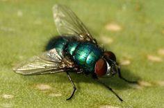 Vliegen verjagen | enkele tips om vliegen te bestrijden om ze buiten de deur en op afstand van je afvalcontainer te houden.